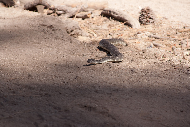 In retrospect, I probably got too close to the rattlesnake.