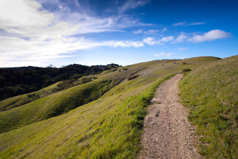 Stretch of trail in Palo Alto's Monte Bello Open Space Preserve