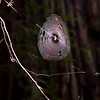 Amazing orb web