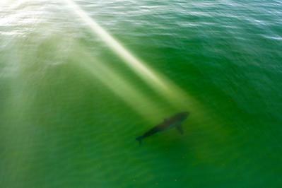 Shark 1st 2020