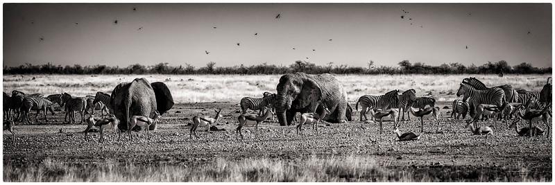 Namibia day 1