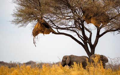 Namibia day 3