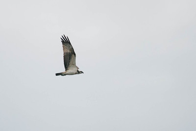 wildlife Biesbosch
