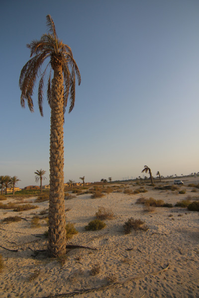 IMG_7110_Arabian Oryx_002