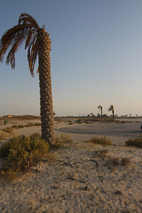 IMG_7109_Arabian Oryx_001