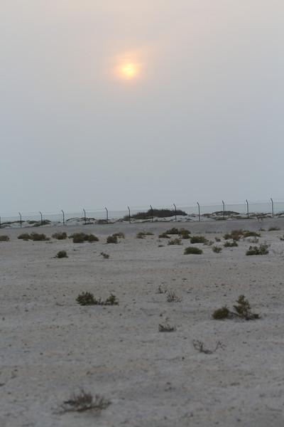 IMG_7372_Arabian Oryx_003