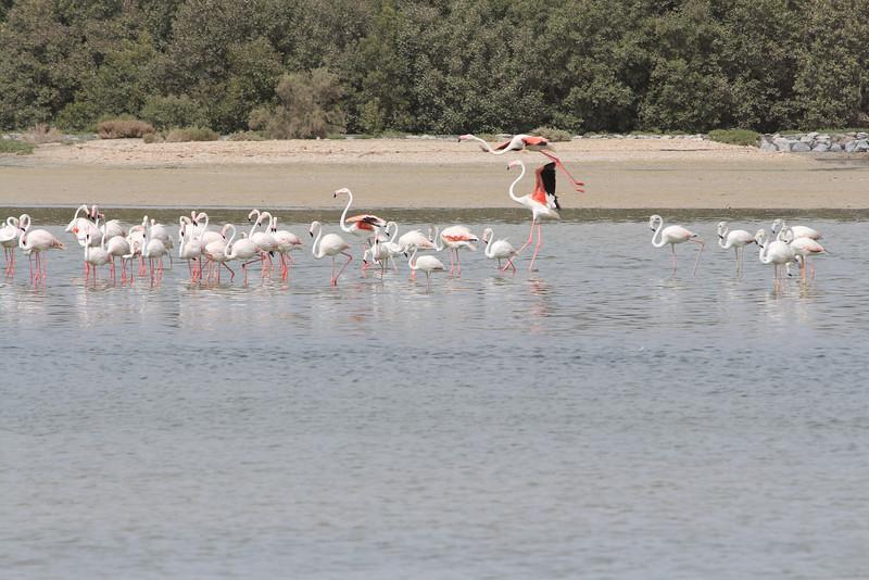 IMG_8070_Flamingoes_122