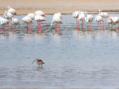 IMG_7956_Flamingoes_008 PS