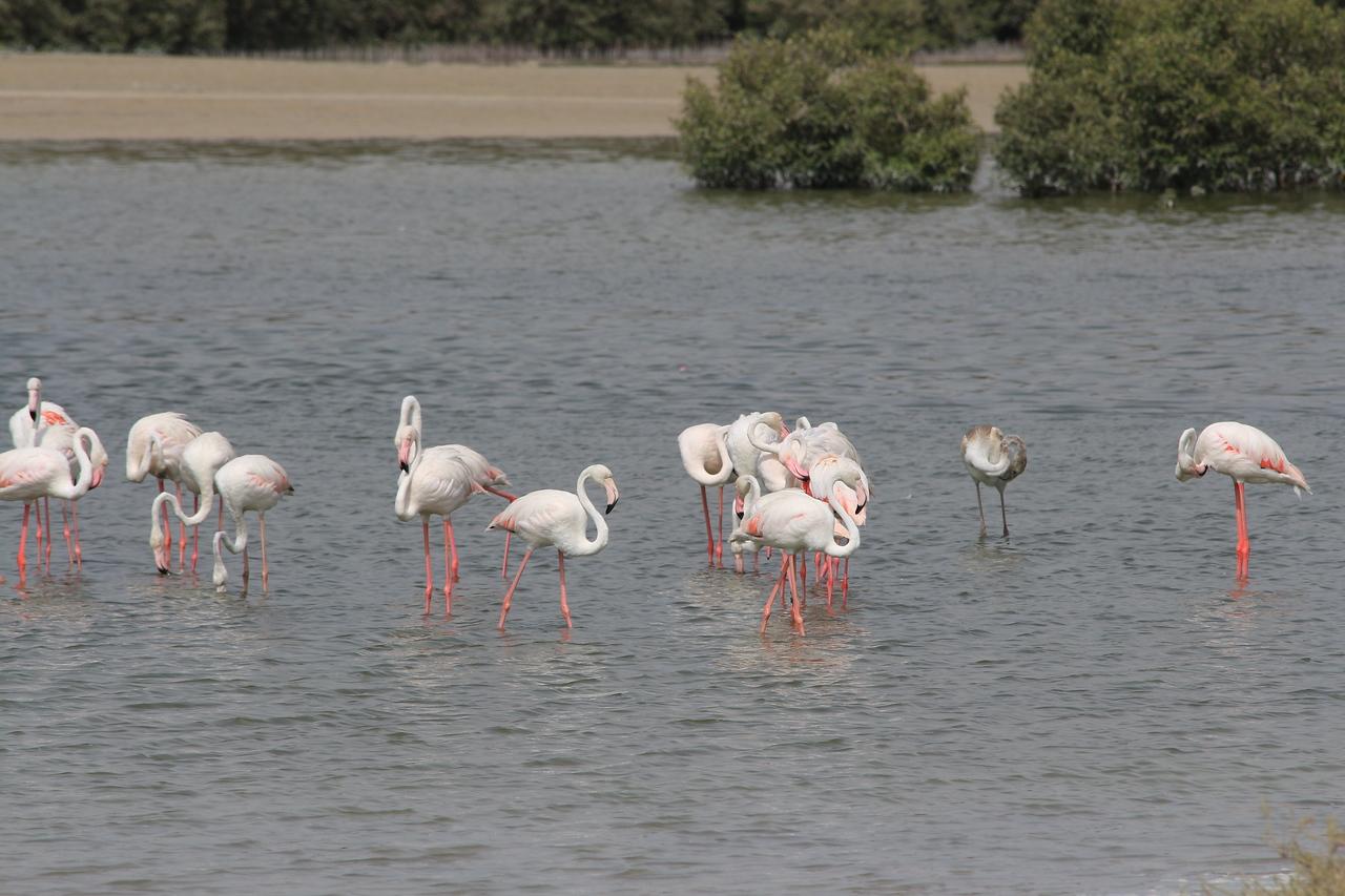 IMG_8080_Flamingoes_132