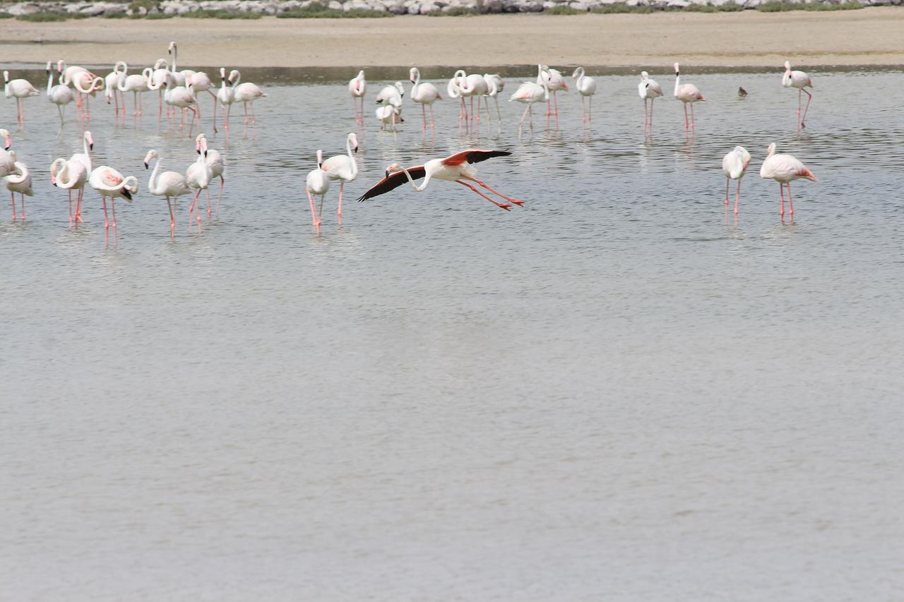 IMG_8058_Flamingoes_110