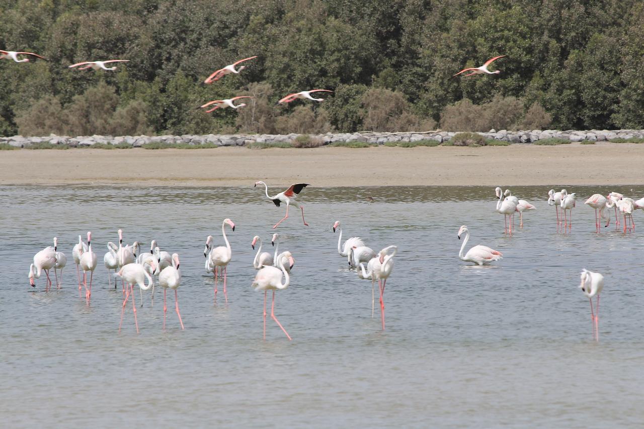 IMG_8071_Flamingoes_123