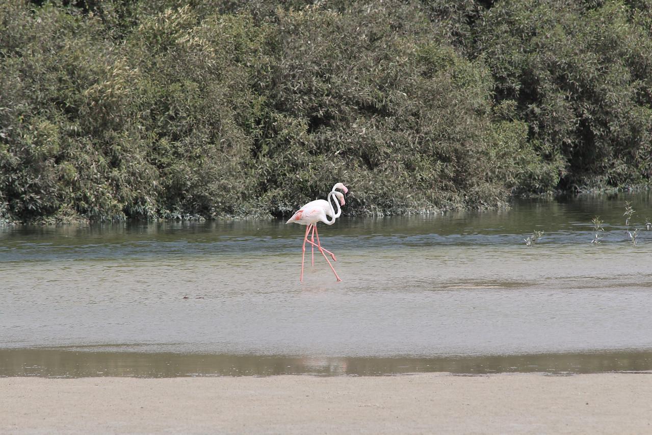 IMG_8028_Flamingoes_080