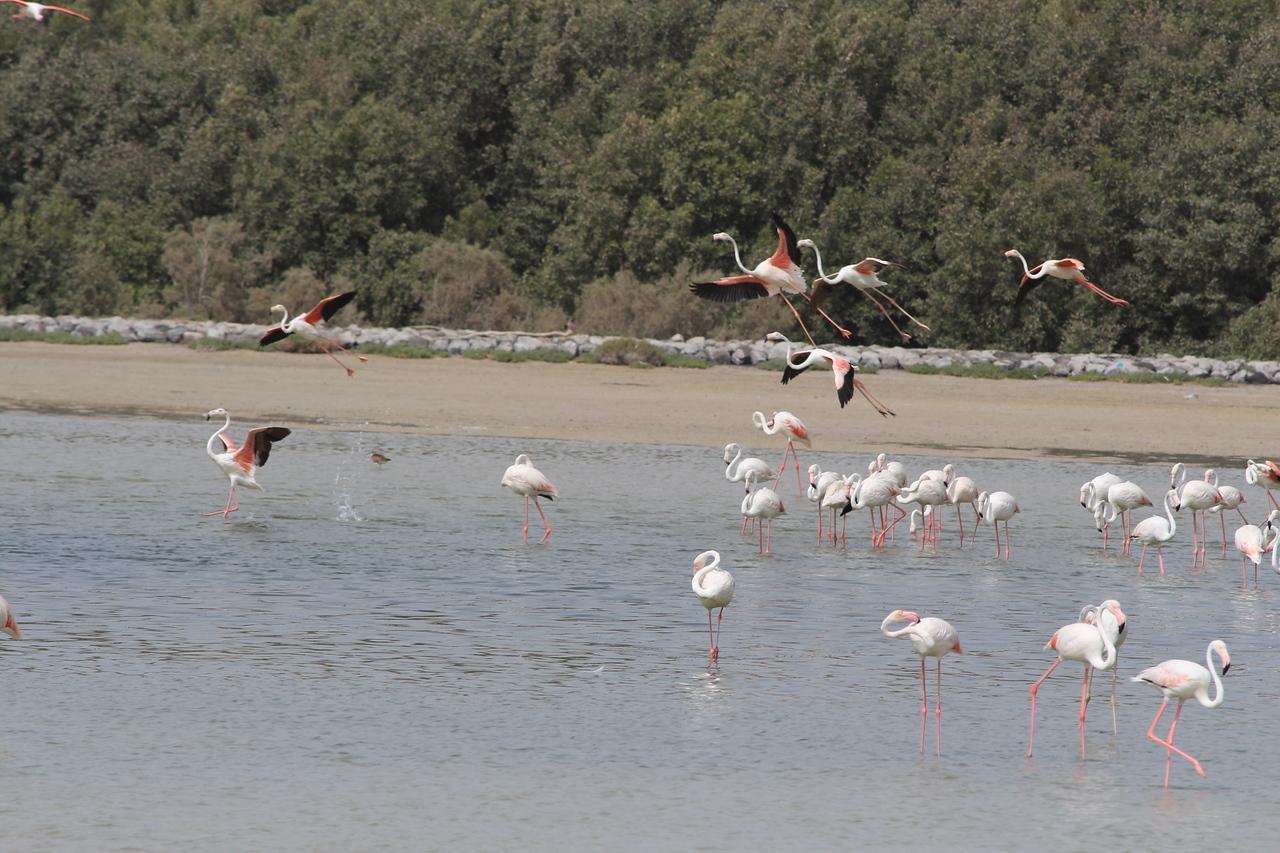 IMG_8086_Flamingoes_138