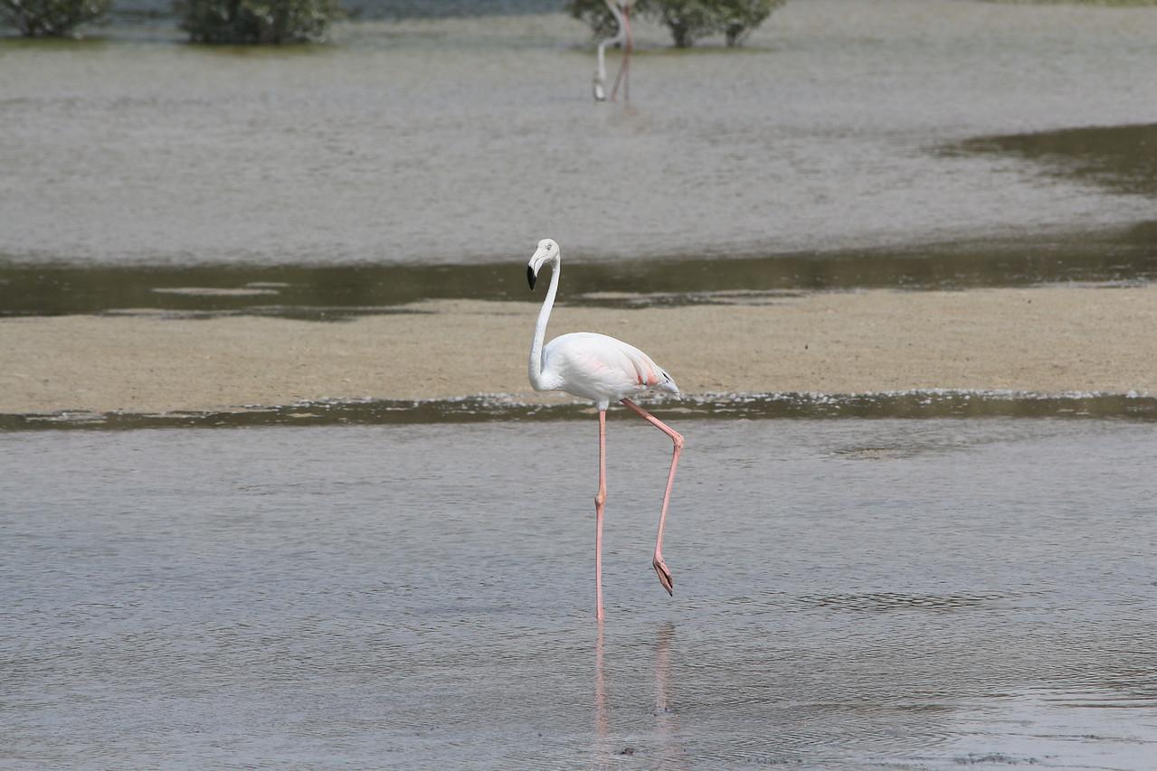 IMG_8050_Flamingoes_102