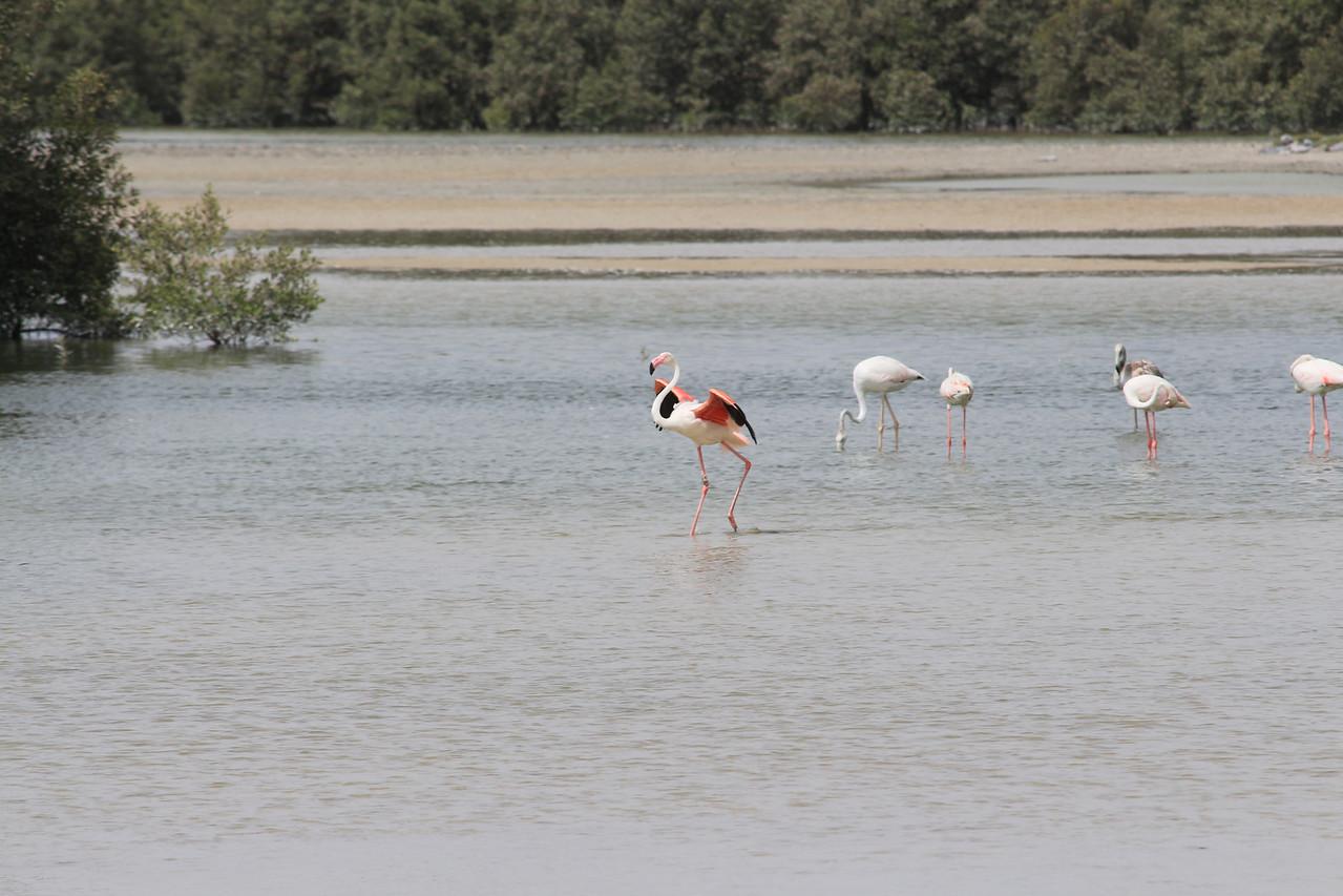 IMG_7990_Flamingoes_042