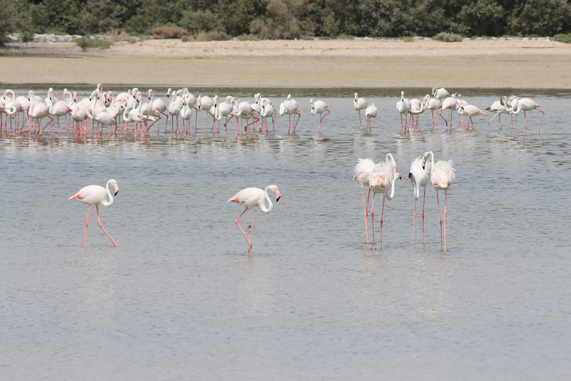 IMG_7997_Flamingoes_049