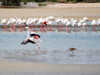 IMG_7962_Flamingoes_014 PS