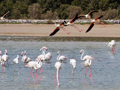 IMG_8072_Flamingoes_124 PS