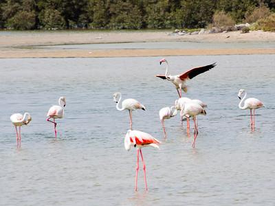 IMG_8091_Flamingoes_143 PS