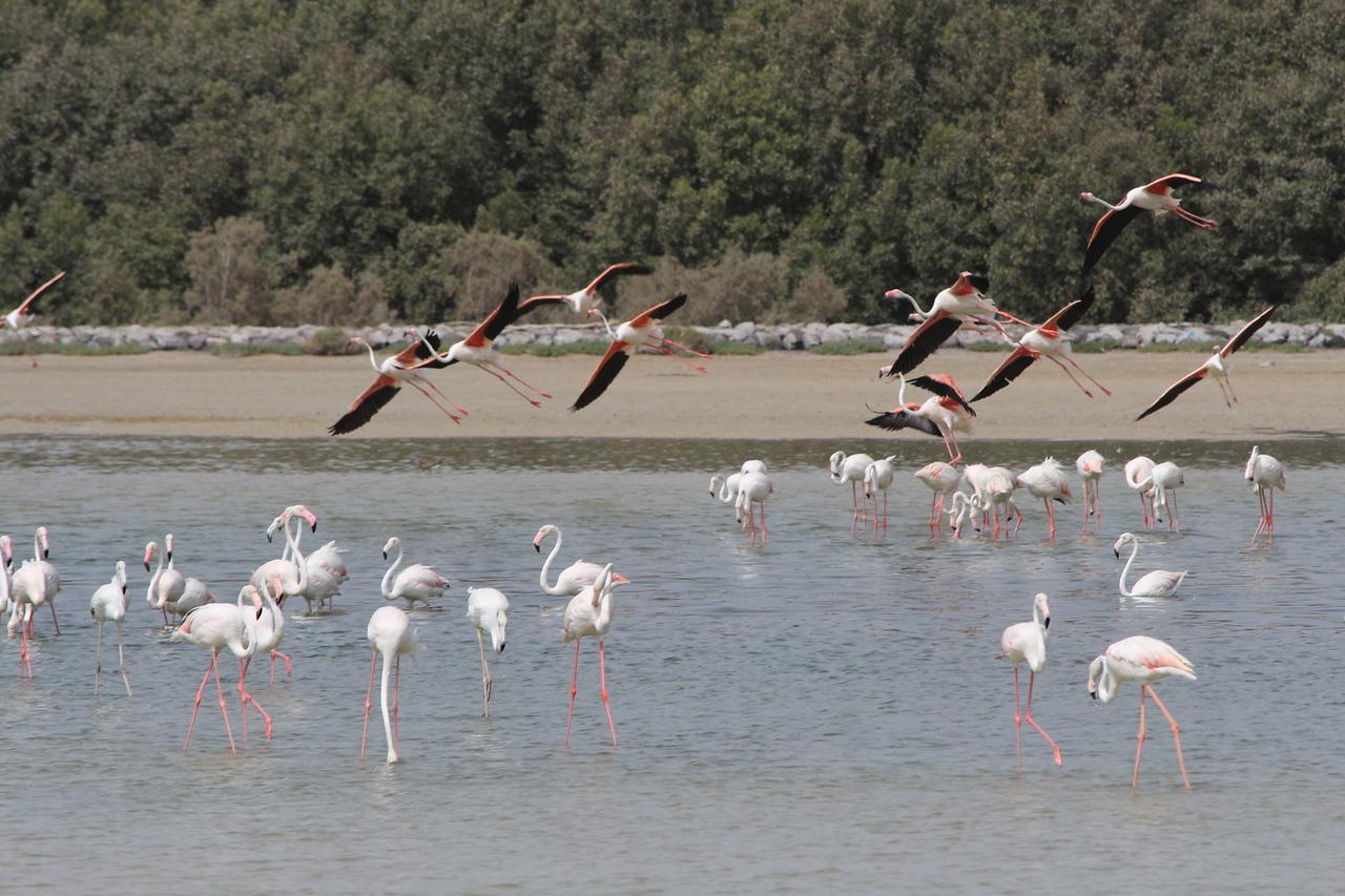 IMG_8072_Flamingoes_124