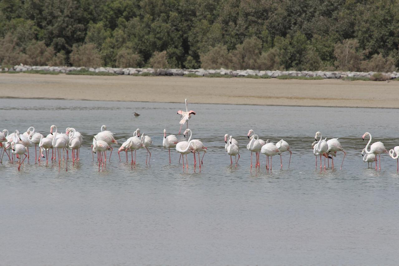 IMG_7976_Flamingoes_028