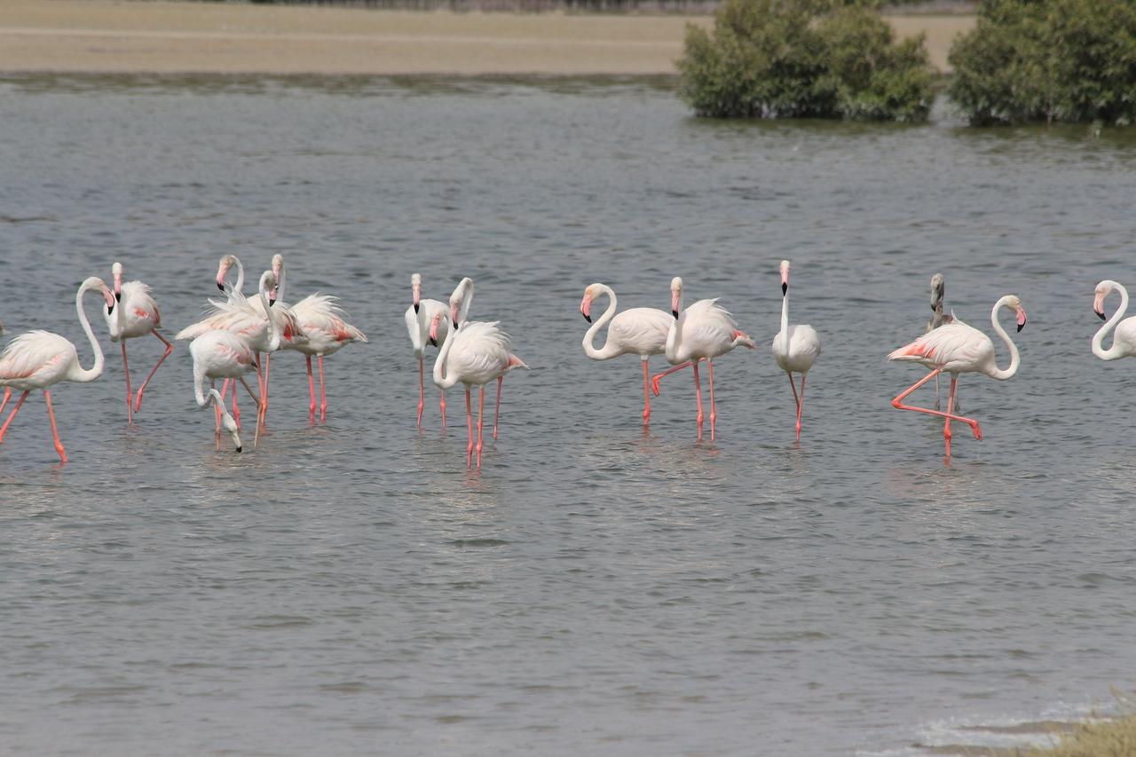 IMG_8081_Flamingoes_133
