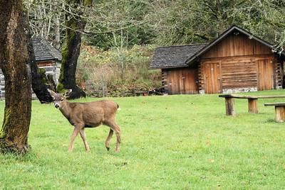Caleb Pike Deer Family, BC, Canada