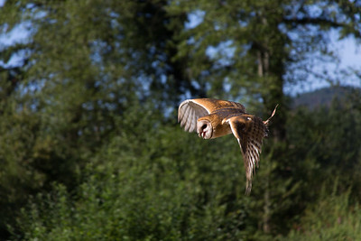 "The Raptors - Cowichan Valley, BC, Canada Visit our blog ""Come Soar With The Eagles"" for the story behind the photo."