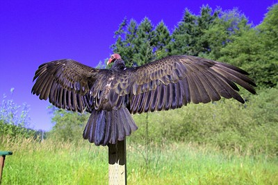 """The Pacific Northwest Raptors - Cowichan Valley, BC, Canada Visit our blog """"Unrivaled Beauty"""" for the story behind the photo."""