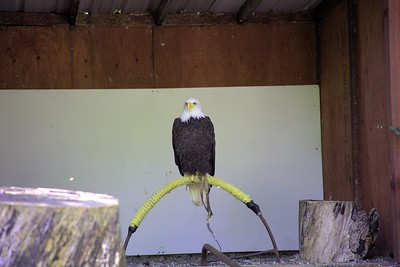 """The Pacific Northwest Raptors - Cowichan Valley, BC, Canada Visit our blog """"The Toads Meet The Raptors"""" for the story behind the photo."""