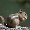 Chipmunk at Alpine Lake