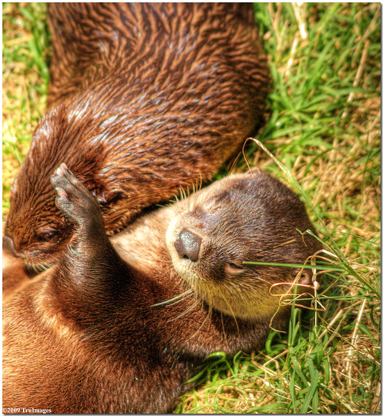 July 25<br /> Playful otters!