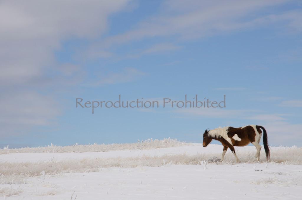 Lone Winter Near the Grand Tetons, WY November 2011