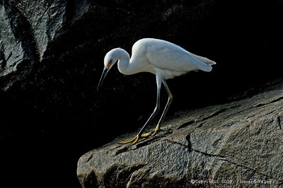 """Simple Elegance"", Egret, Solana Beach, Ca., 08/28/10"