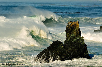 """""""High and Dry""""  A winter storm along the northern California Coast produced huge breaking waves.  Cormorants, usually on the outer islands, took refuge atop this tall sea stack."""