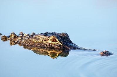 Pine Glades Lake Everglades National Park