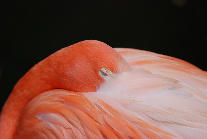 Flamingo - Homosassa Springs Wildlife State Park