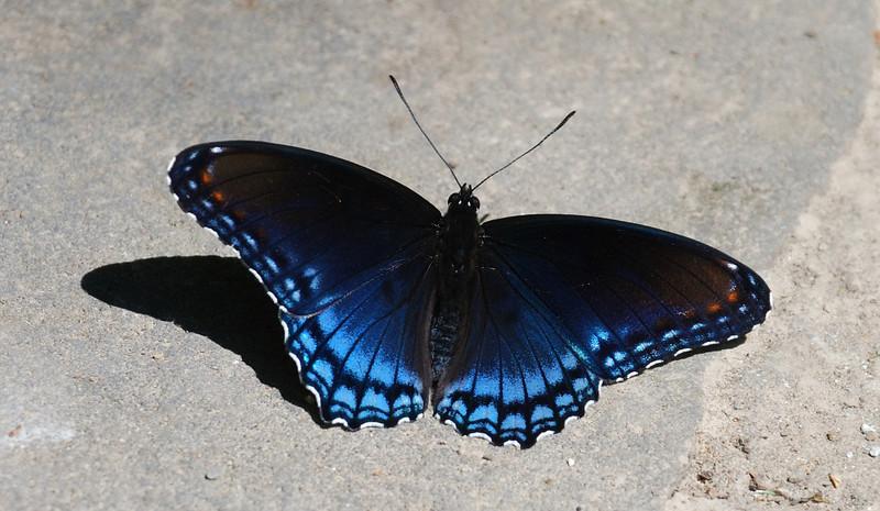 Butterfly at Boley Lake