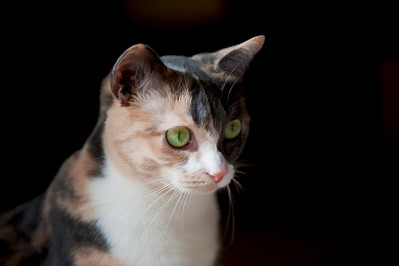 """""""Isabella"""", one of my two cats."""