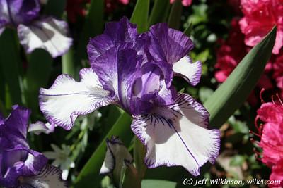Wilk4 Floral 1