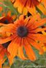 IMG_1901_flowers