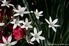 #3955 white star flowers