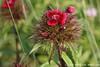#4171 wildflower