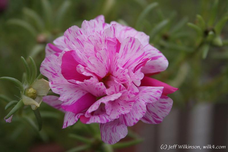IMG_2028_flower