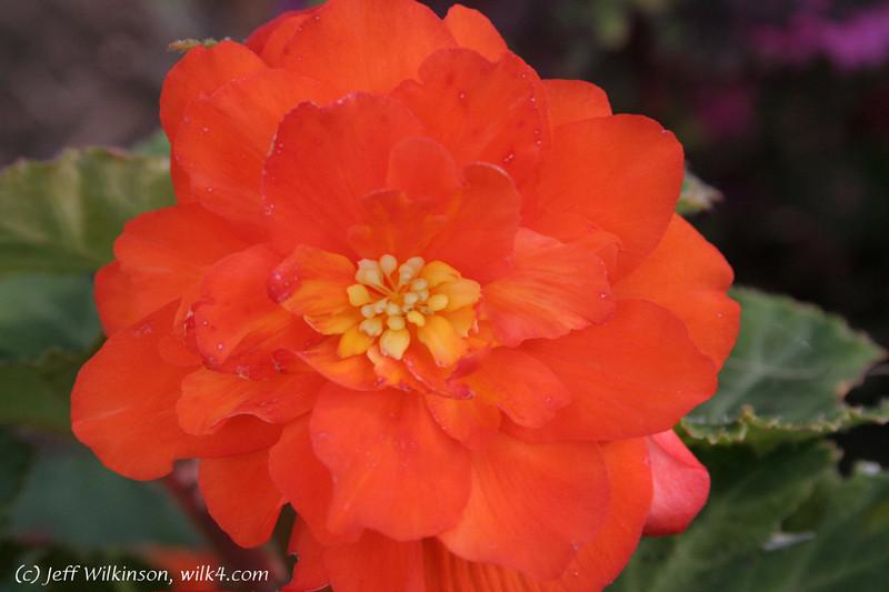 IMG_2021_flower