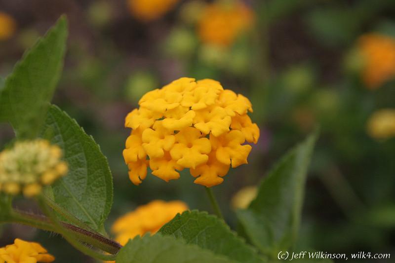 IMG_1881_flowers