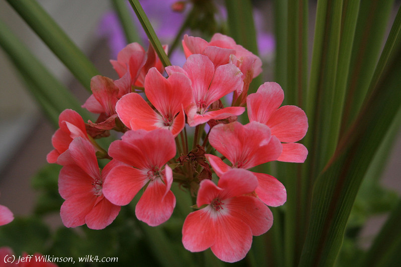 IMG_1992_flower