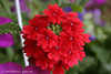 IMG_1370_flowers