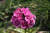 #4181 wildflower