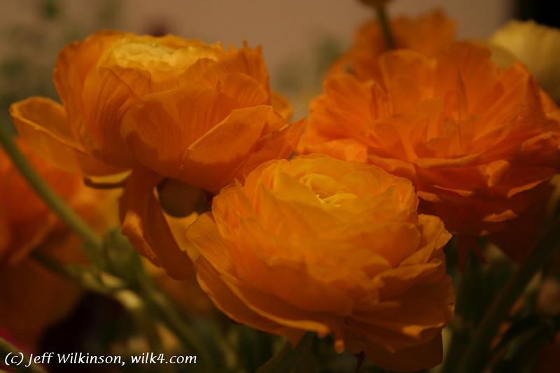 #3828 Ranunculus